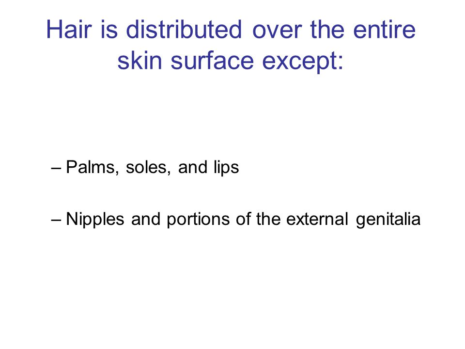 Hair is distributed over the entire skin surface except: