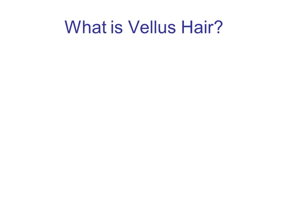What is Vellus Hair
