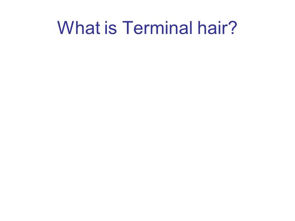 What is Terminal hair
