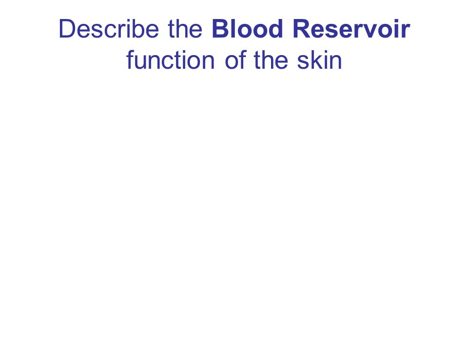 Describe the Blood Reservoir function of the skin