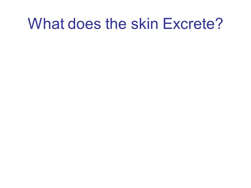 What does the skin Excrete