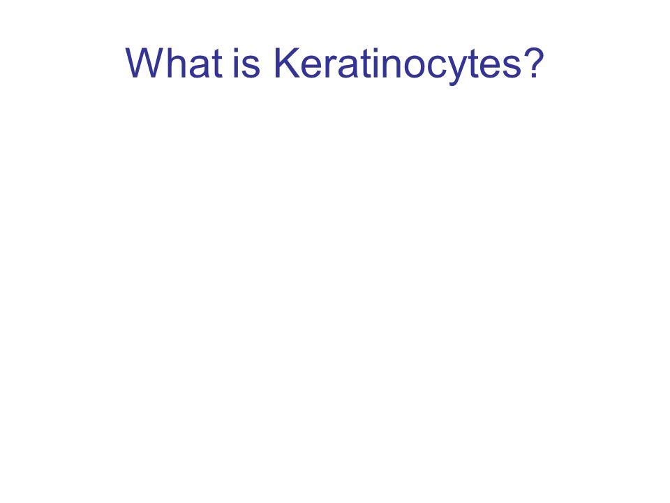 What is Keratinocytes