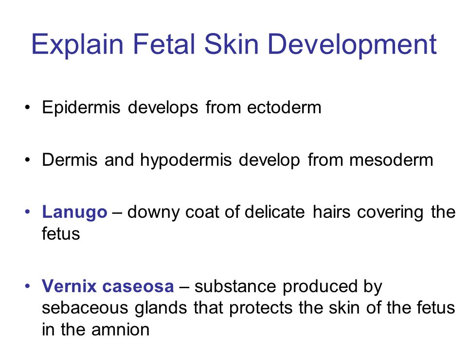 Explain Fetal Skin Development