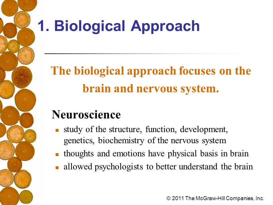 The biological approach focuses on the brain and nervous system.