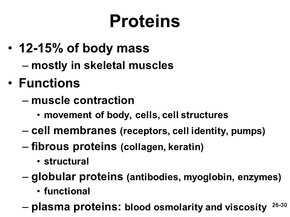 Proteins 12-15% of body mass Functions mostly in skeletal muscles