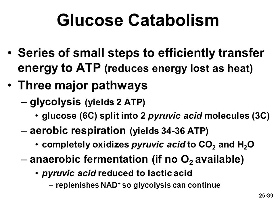 Glucose Catabolism Series of small steps to efficiently transfer energy to ATP (reduces energy lost as heat)