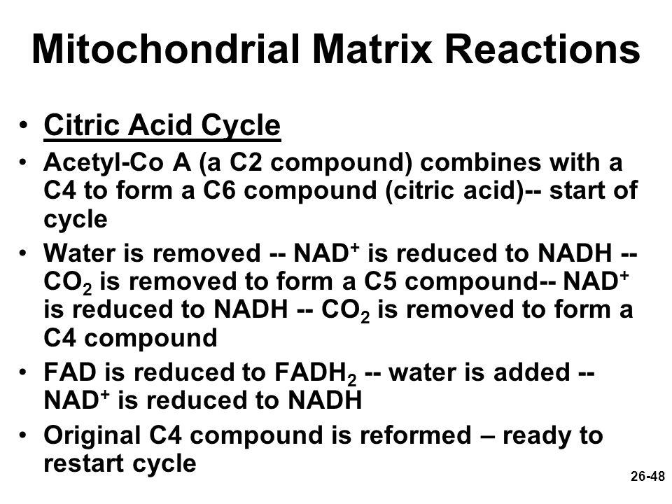Mitochondrial Matrix Reactions