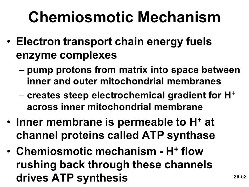 Chemiosmotic Mechanism