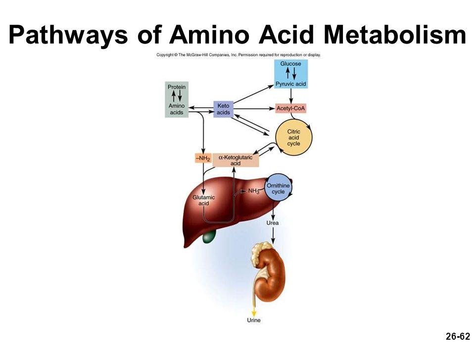 Pathways of Amino Acid Metabolism