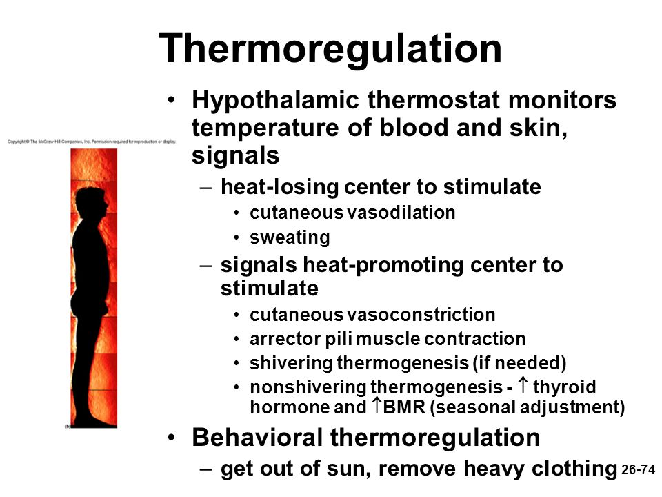 Thermoregulation Hypothalamic thermostat monitors temperature of blood and skin, signals. heat-losing center to stimulate.