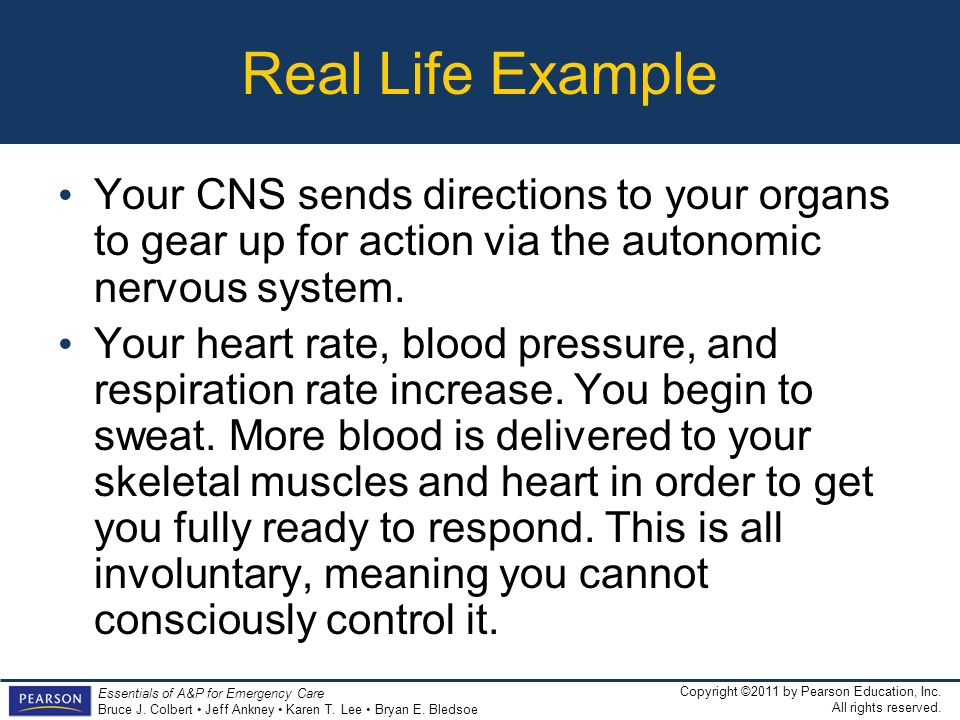 Real Life Example Your CNS sends directions to your organs to gear up for action via the autonomic nervous system.
