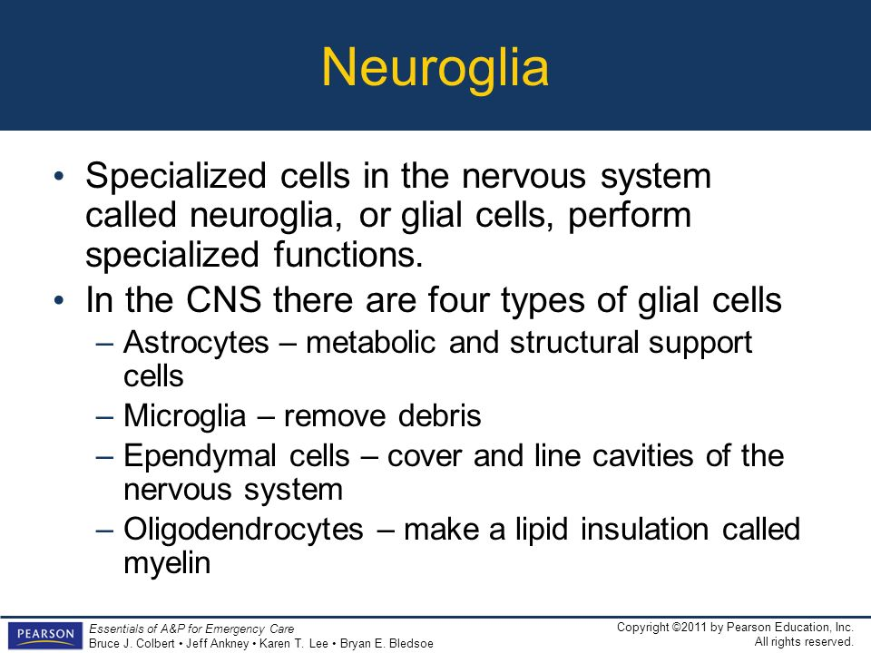 Neuroglia Specialized cells in the nervous system called neuroglia, or glial cells, perform specialized functions.