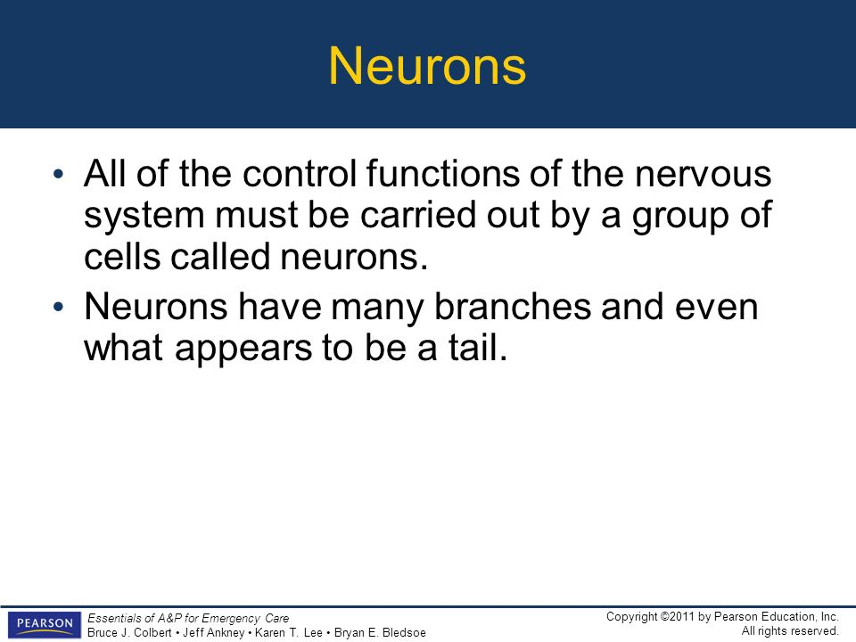 Neurons All of the control functions of the nervous system must be carried out by a group of cells called neurons.