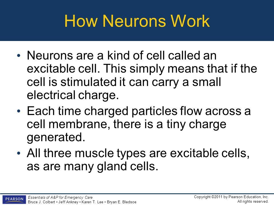 How Neurons Work
