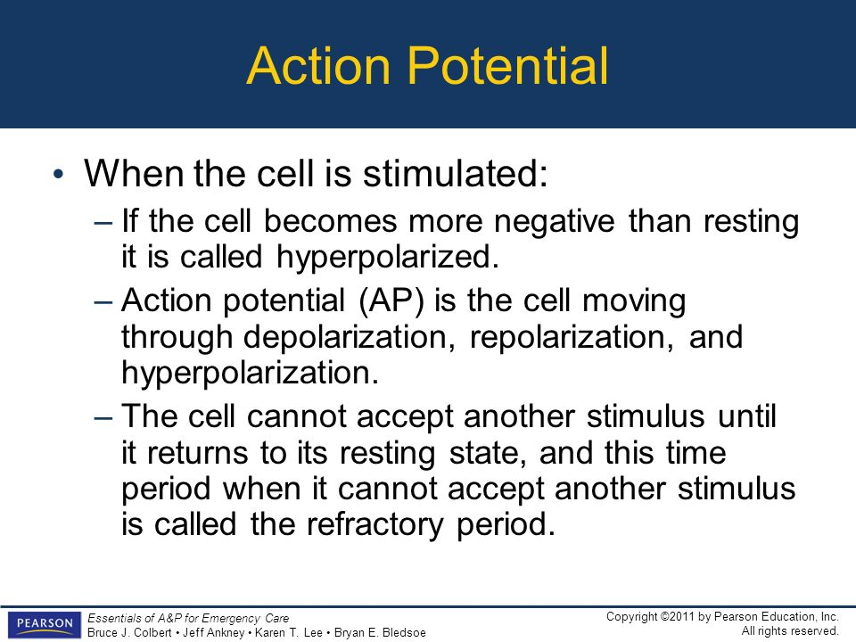 Action Potential When the cell is stimulated:
