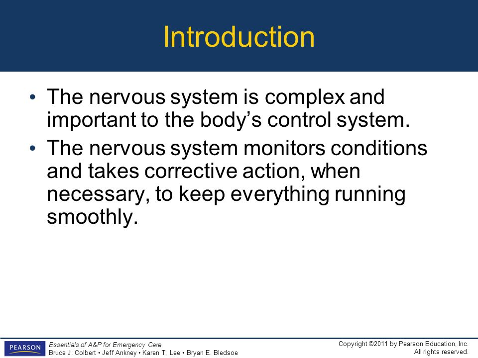 Introduction The nervous system is complex and important to the body's control system.