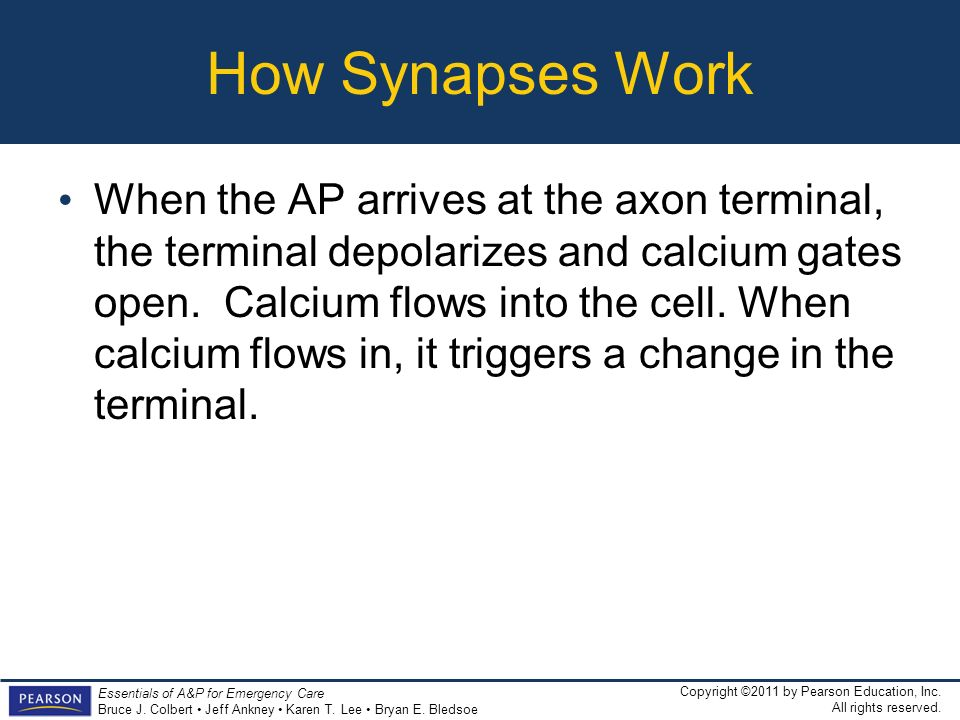 How Synapses Work