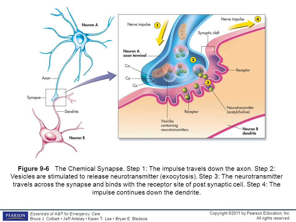 Figure 9-6 The Chemical Synapse