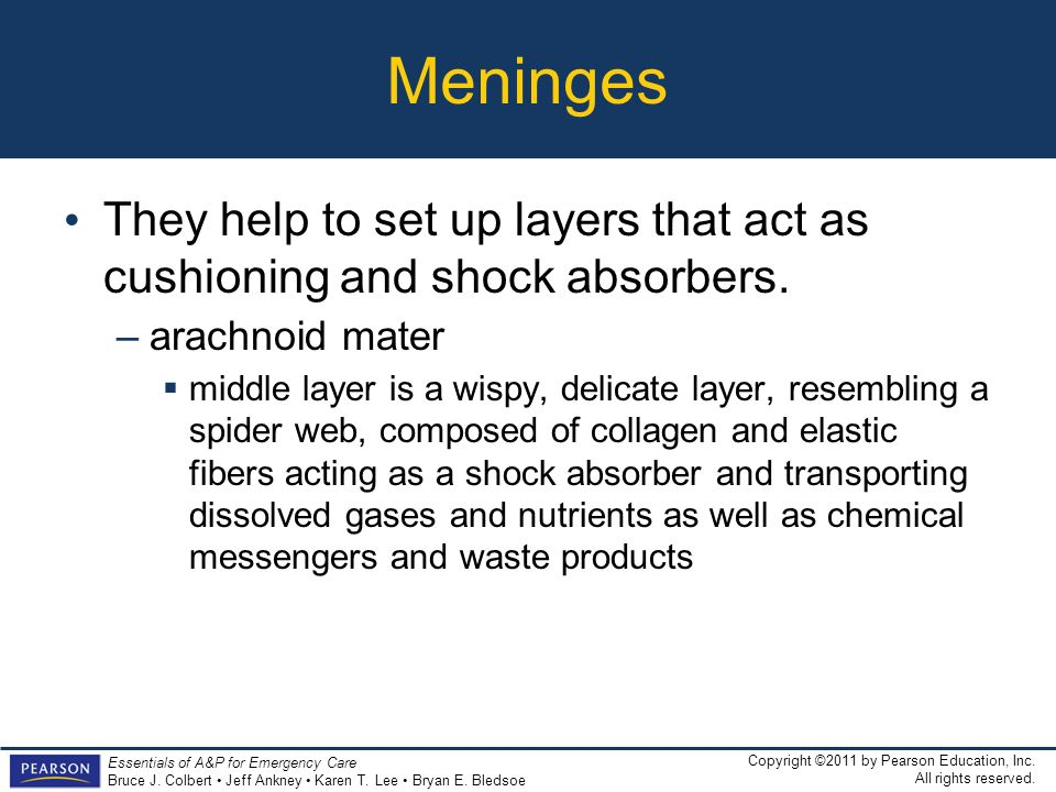 Meninges They help to set up layers that act as cushioning and shock absorbers. arachnoid mater.