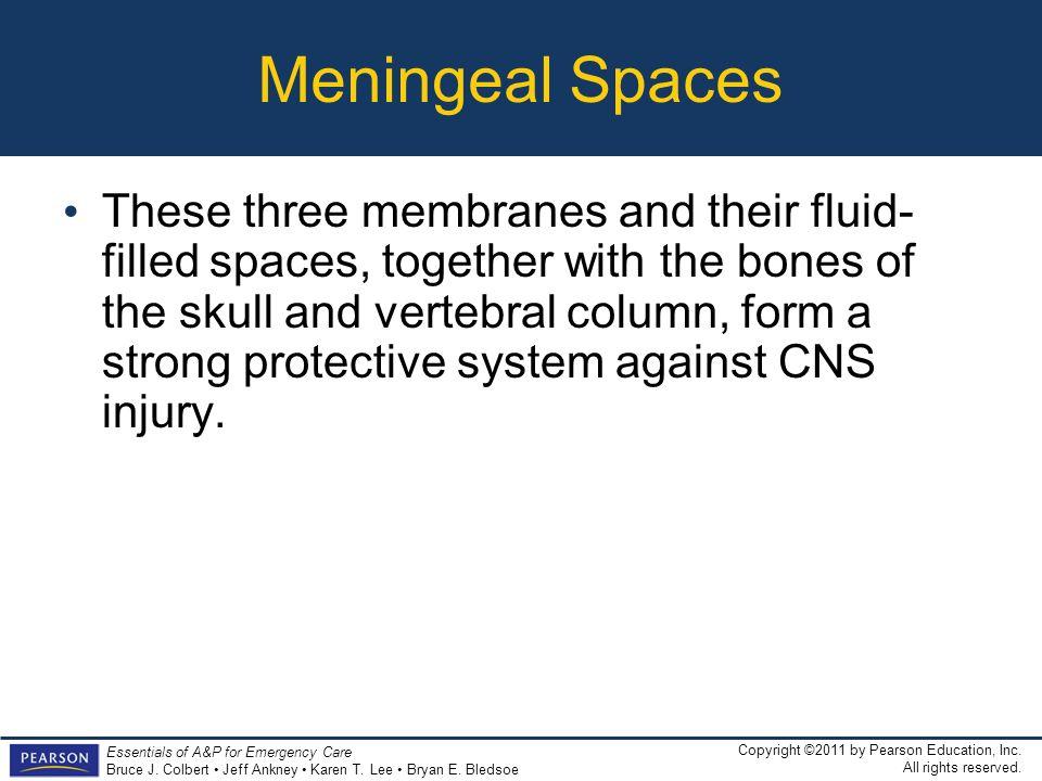 Meningeal Spaces