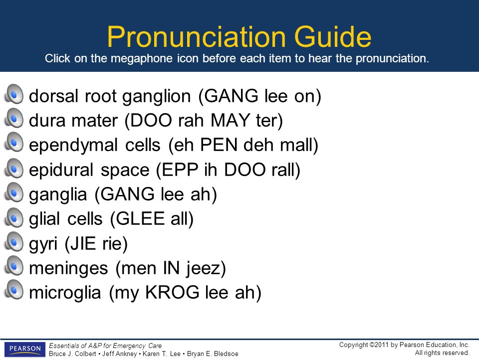 Pronunciation Guide dorsal root ganglion (GANG lee on)