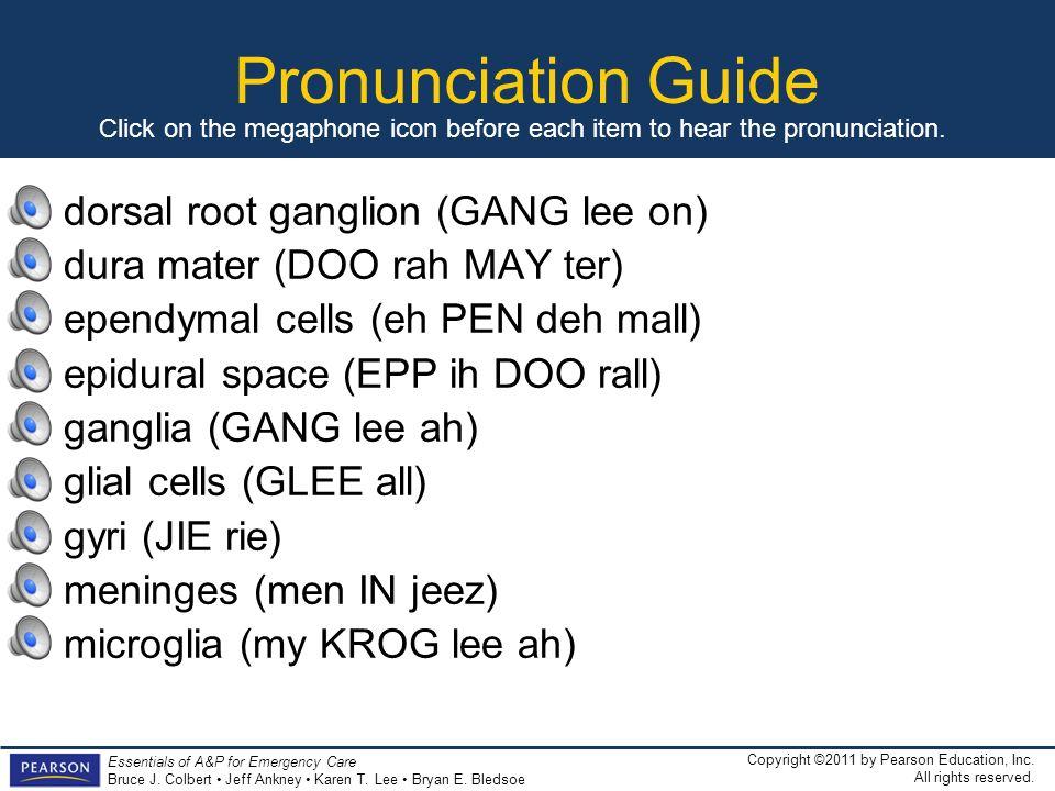 Pronunciation Guide dorsal root ganglion (GANG lee on)