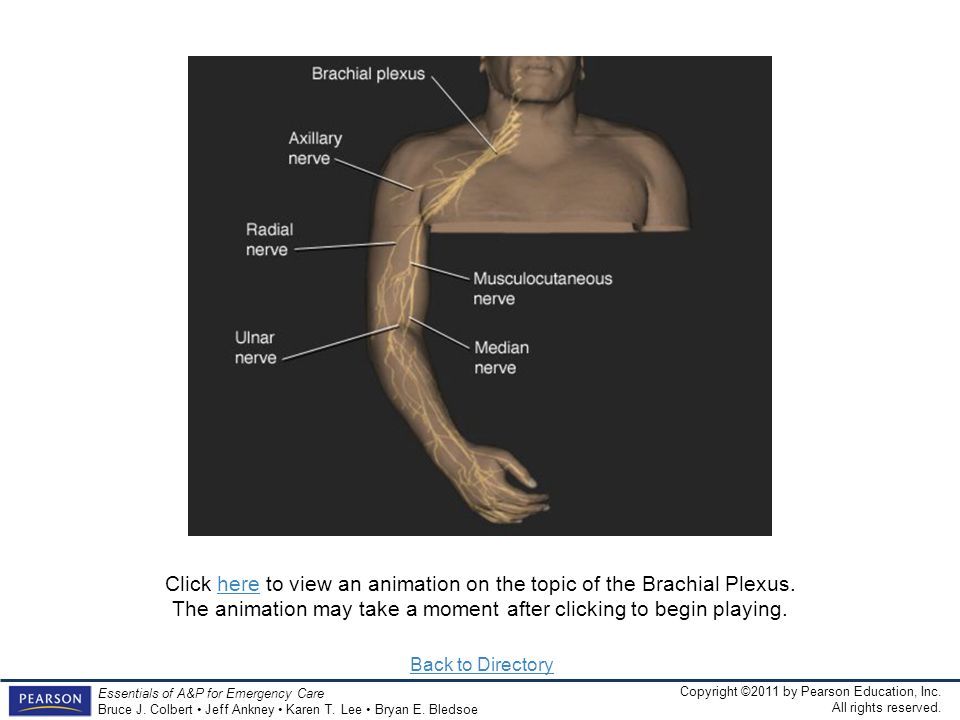 Click here to view an animation on the topic of the Brachial Plexus