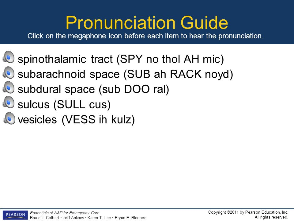 Pronunciation Guide spinothalamic tract (SPY no thol AH mic)