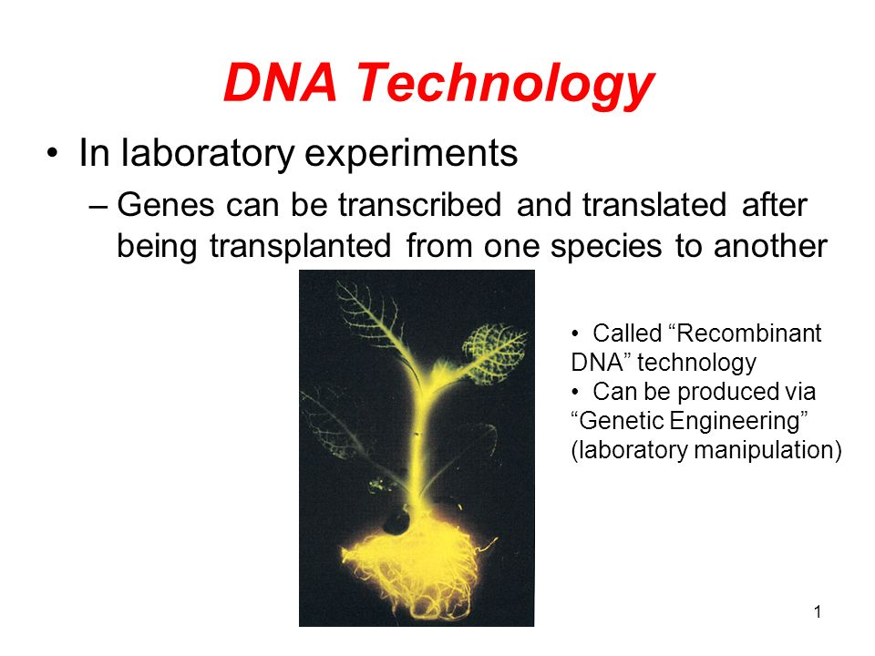 DNA Technology In laboratory experiments
