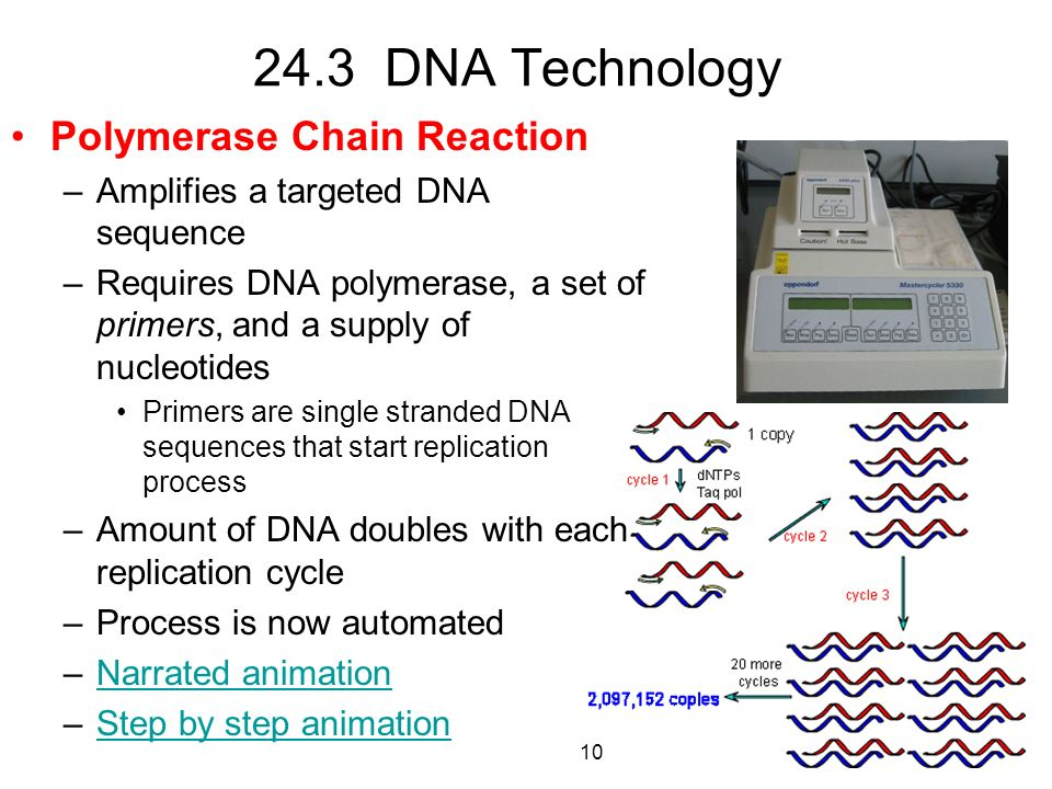 24.3 DNA Technology Polymerase Chain Reaction