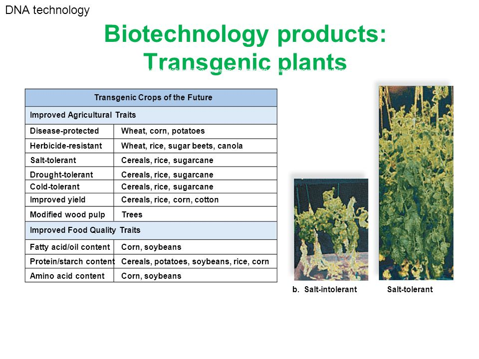 Biotechnology products: Transgenic plants