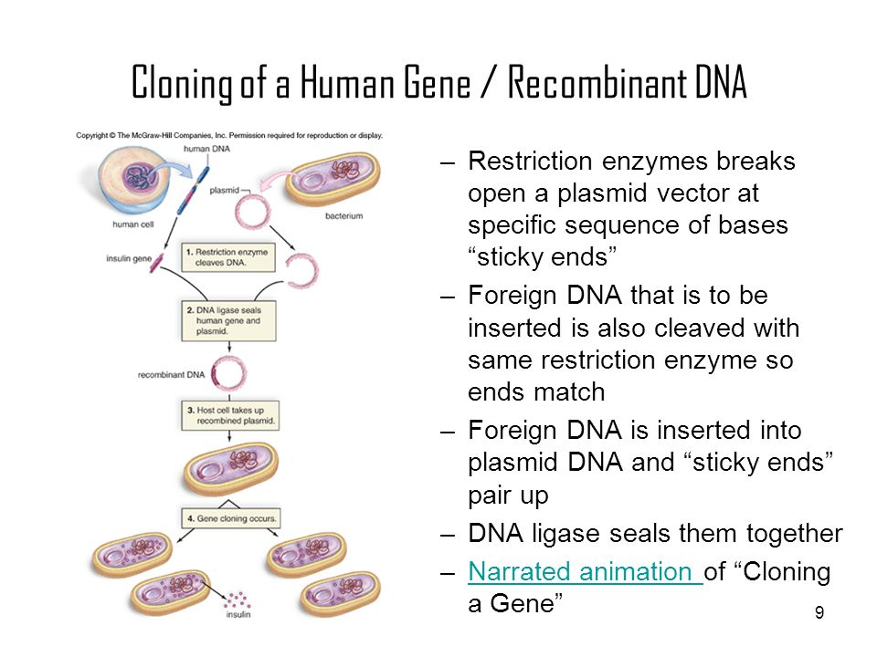 Cloning of a Human Gene / Recombinant DNA