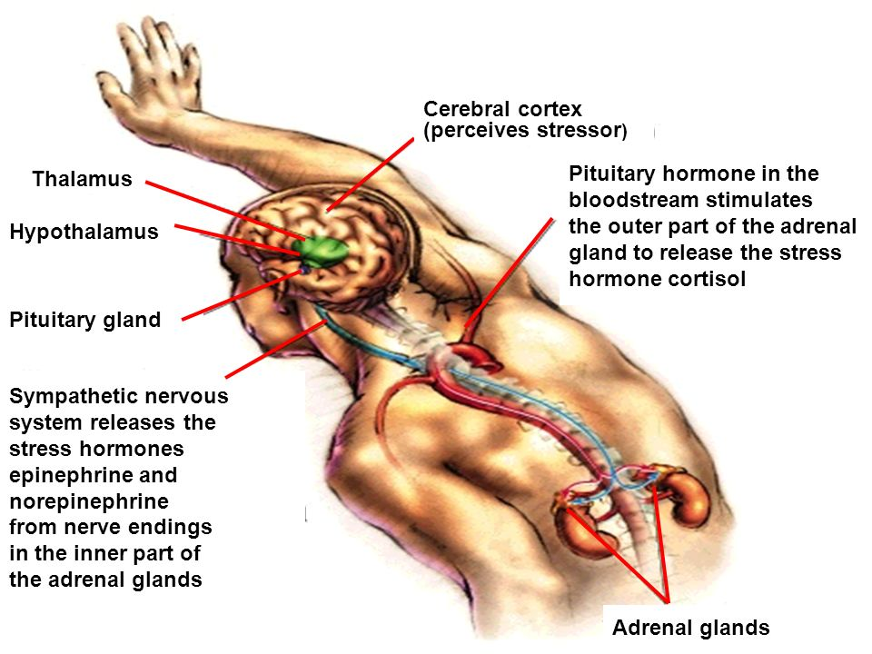 Pituitary hormone in the