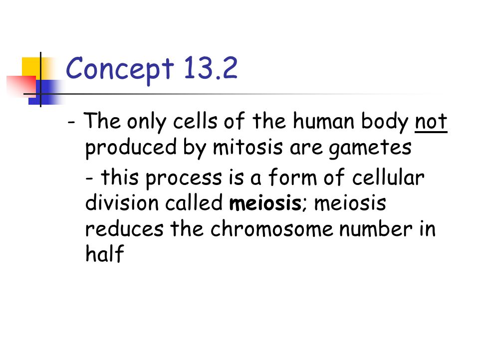 Concept 13.2 - The only cells of the human body not produced by mitosis are gametes.