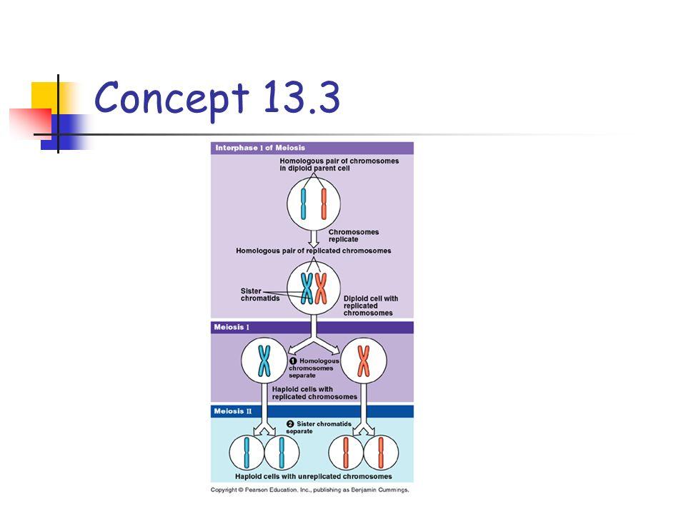 Concept 13.3