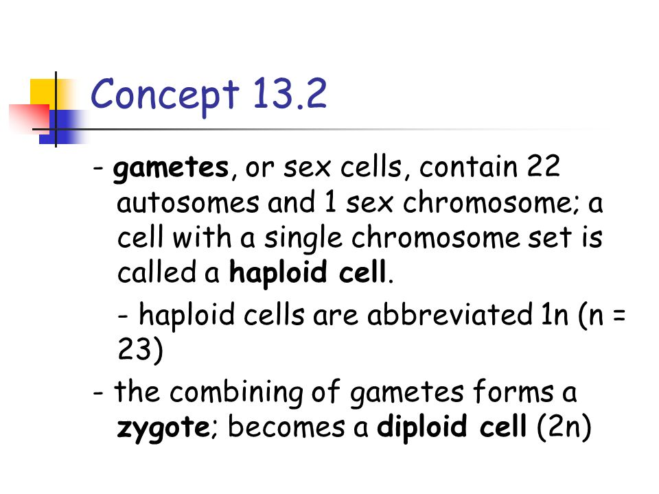 Concept 13.2 - gametes, or sex cells, contain 22 autosomes and 1 sex chromosome; a cell with a single chromosome set is called a haploid cell.