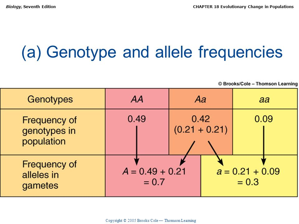(a) Genotype and allele frequencies