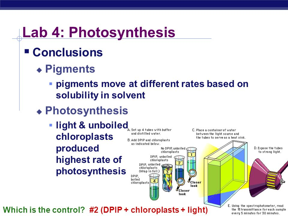 ap photosynthesis lab conclusion Ap bio-ch 7: photosynthesis mcgraw hill 8th edition the data of the measure of the rate of photosynthesis at each wavelength of light that are plotted on a.