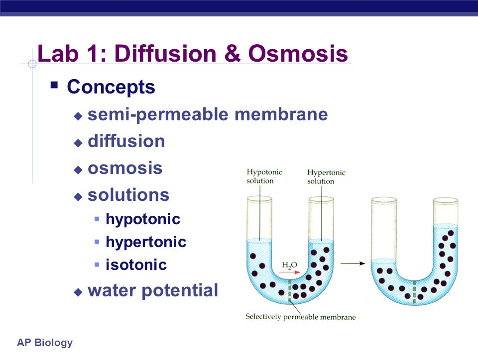 ap biology osmosis and diffusion essay Ap biology lab diffusion and osmosis teacher's guide.