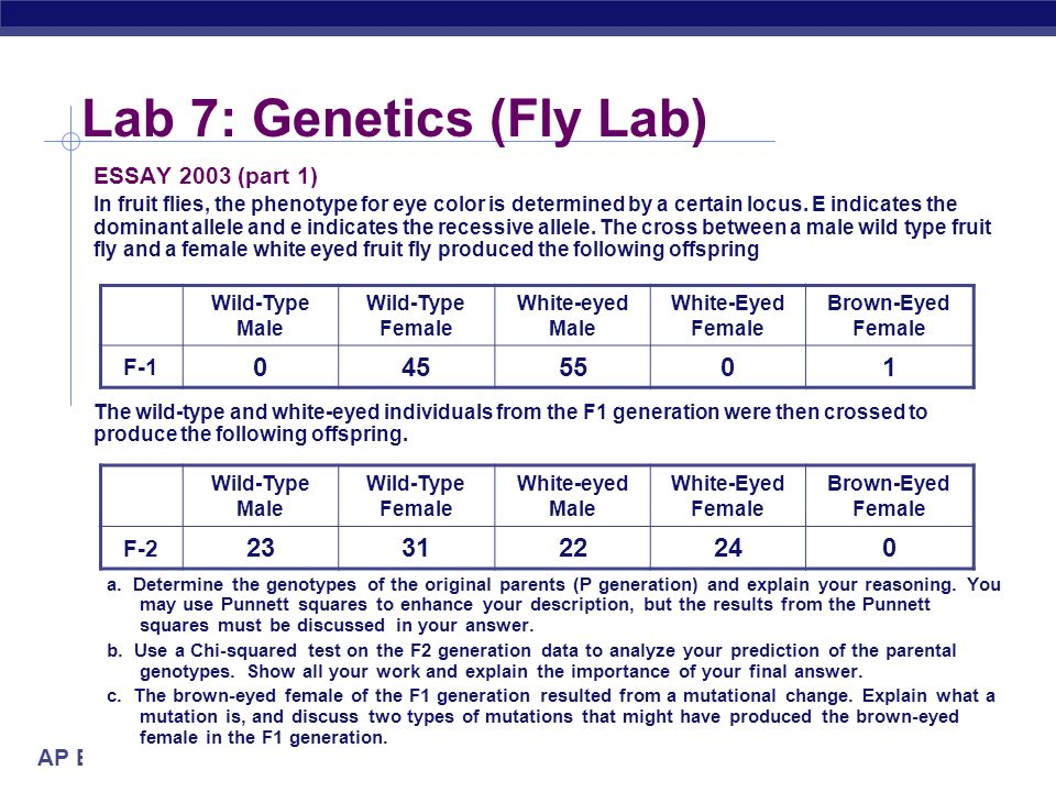 ap biology molecular genetics essays Ap biology course outline molecular biology 7) genetics & organisms 8) ap grades: the scores on the essay and problem solving questions are combined with.