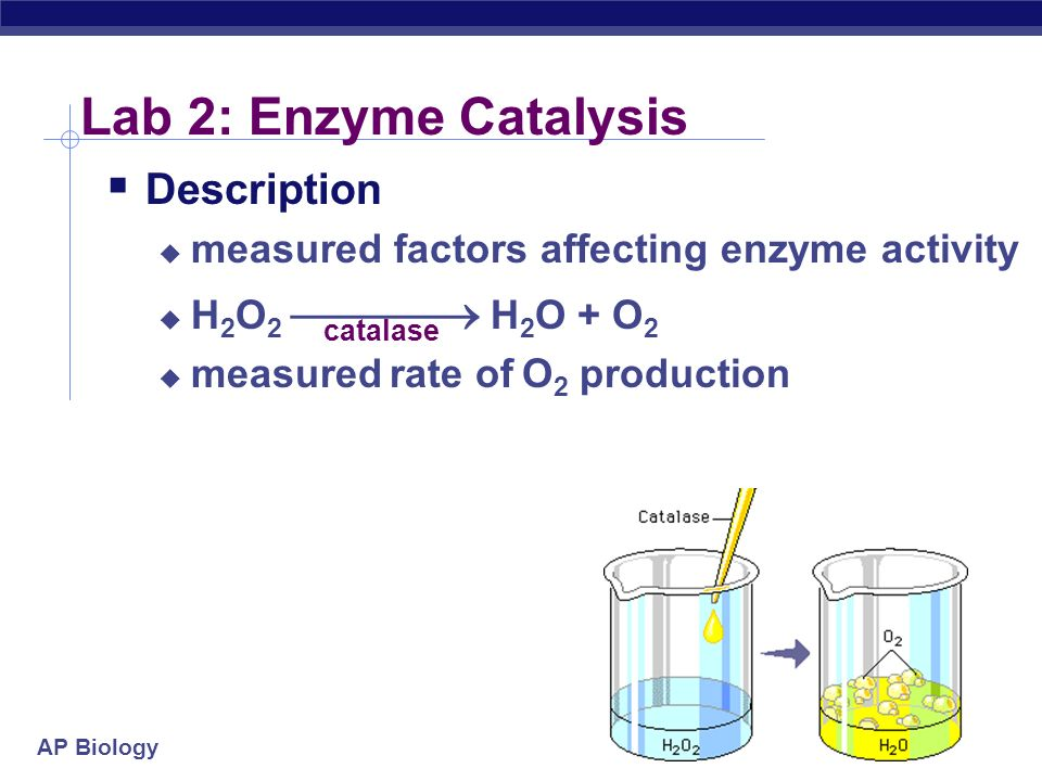 enzyme catalase labs Enzyme catalysis by theresa knapp holtzclaw introduction enzymes catalyze reactions by lowering the activation energy necessary for a reaction to occur in this laboratory, you will study some of the basic principles of molecular movement in solution and perform a series of activities to investigate these processes  lab skills closer.
