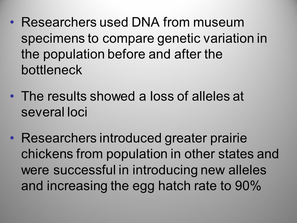 Researchers used DNA from museum specimens to compare genetic variation in the population before and after the bottleneck