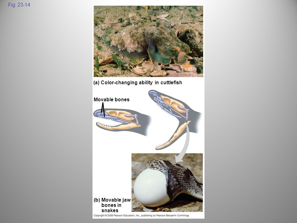Fig (a) Color-changing ability in cuttlefish. Movable bones. Figure Examples of adaptations.