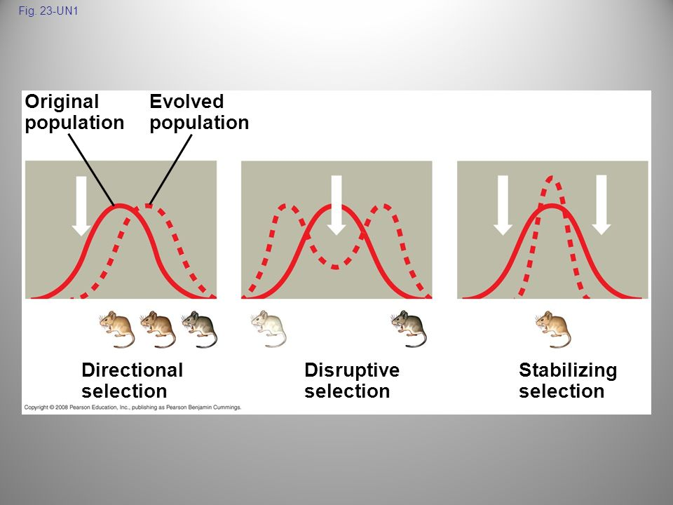 Original population Evolved population Directional selection
