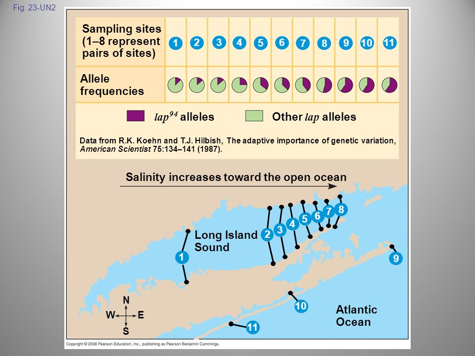 Salinity increases toward the open ocean