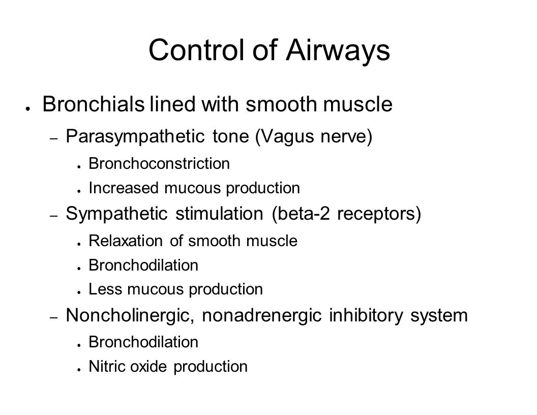 Control of Airways Bronchials lined with smooth muscle