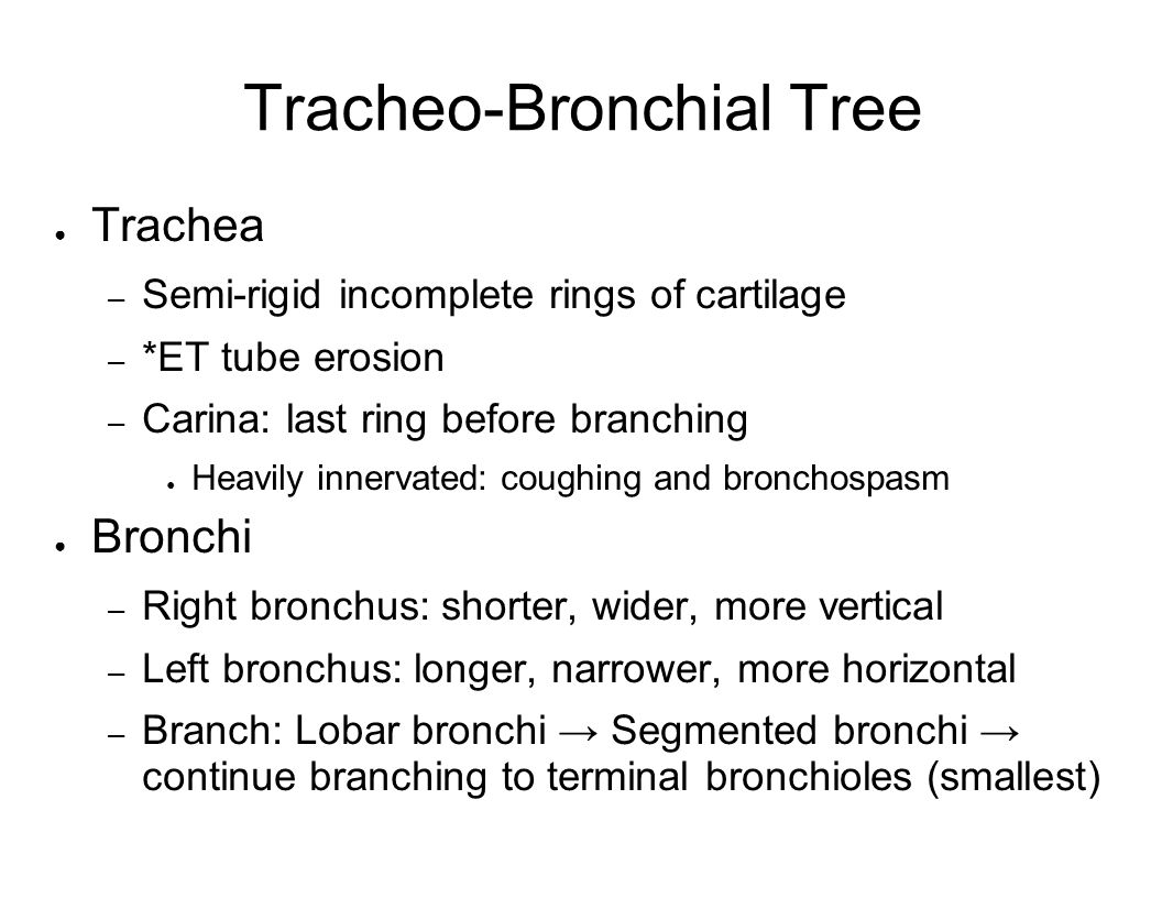 Tracheo-Bronchial Tree