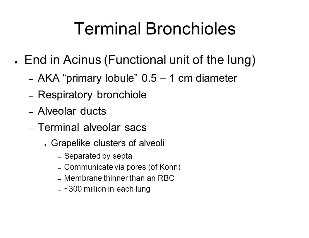 Terminal Bronchioles End in Acinus (Functional unit of the lung)