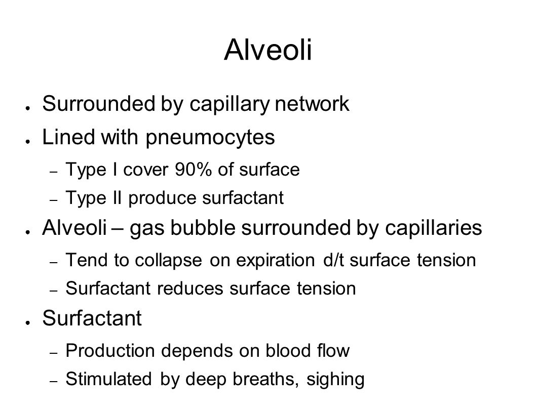Alveoli Surrounded by capillary network Lined with pneumocytes