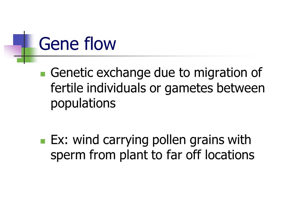 Gene flow Genetic exchange due to migration of fertile individuals or gametes between populations.